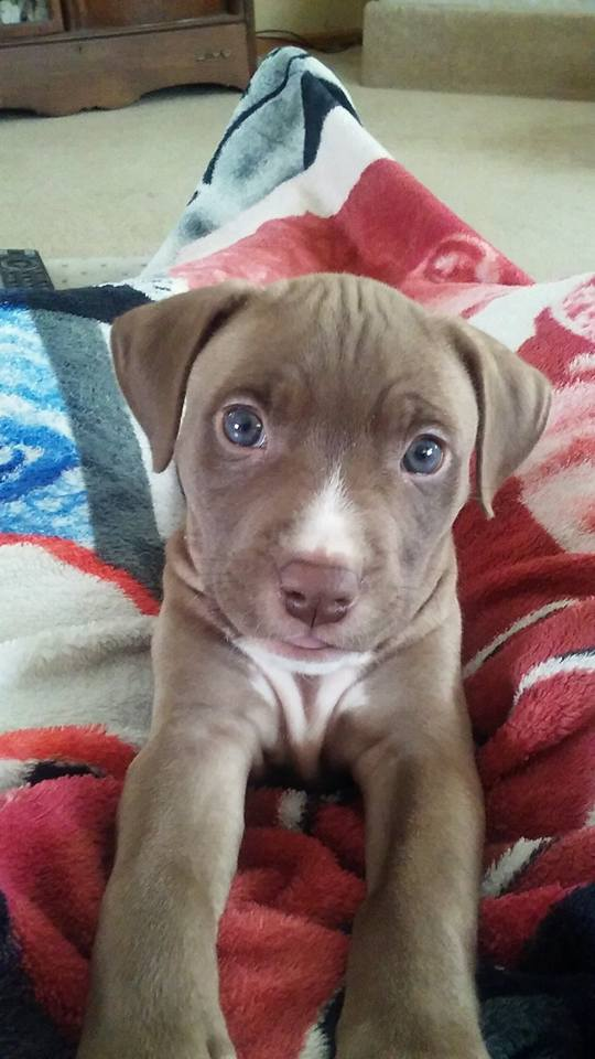 puppydoc